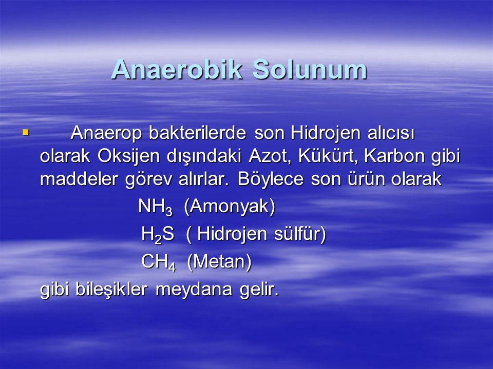 Anaerobik Solunum
