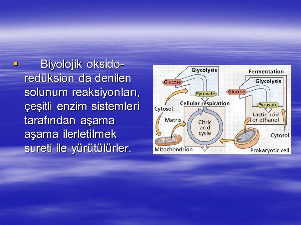 Biyolojik oksido-redüksion da denilen solunum reaksiyonları, çeşitli enzim sistemleri tarafından aşama aşama ilerletilmek sureti ile yürütülürler.