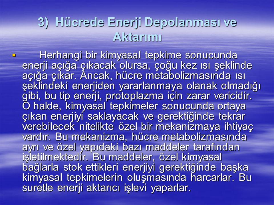 3) Hücrede Enerji Depolanması ve Aktarımı