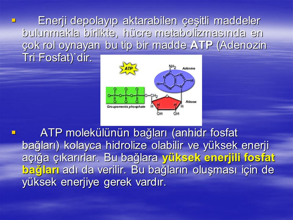 Enerji depolayıp aktarabilen çeşitli maddeler bulunmakla birlikte, hücre metabolizmasında en çok rol oynayan bu tip bir madde ATP (Adenozin Tri Fosfat)`dir.