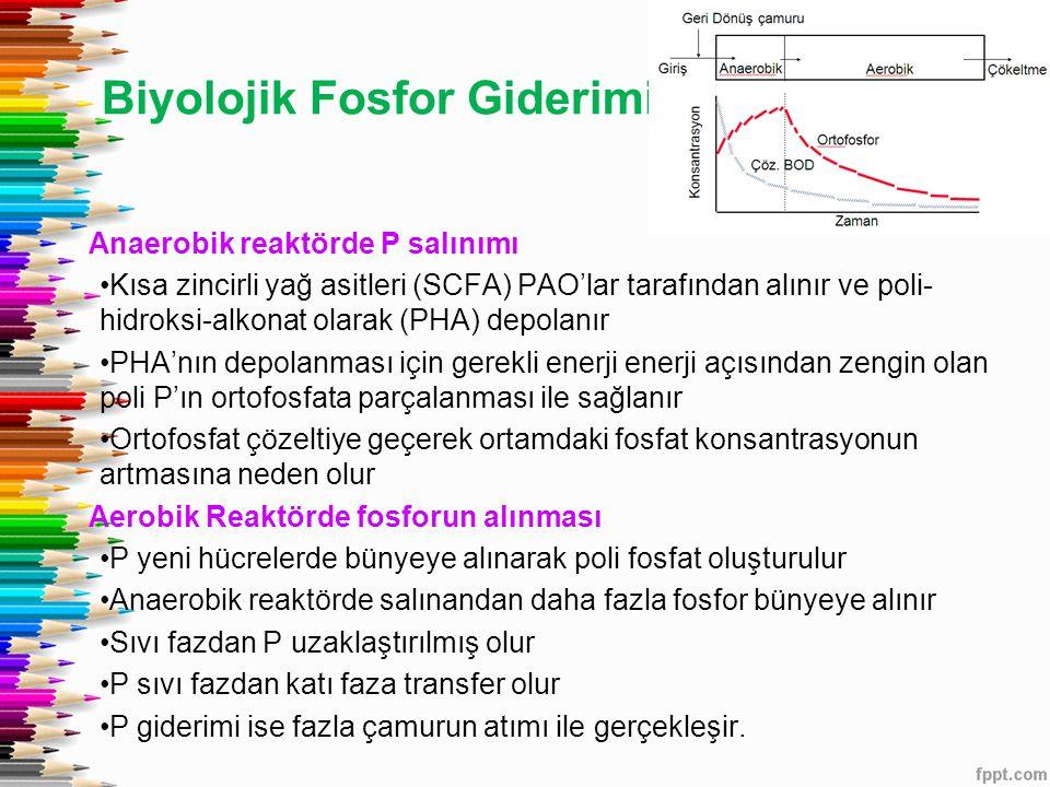 Biyolojik Fosfor Giderimi
