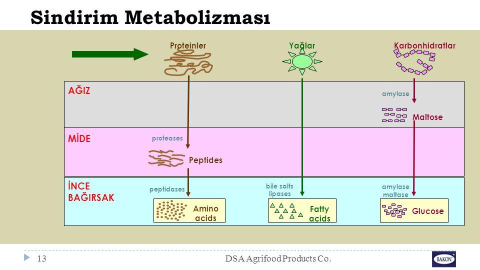 Sindirim Metabolizması