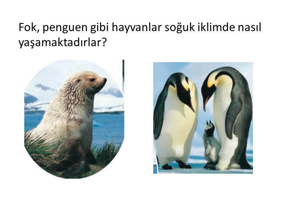 Fok, penguen gibi hayvanlar soğuk iklimde nasıl yaşamaktadırlar