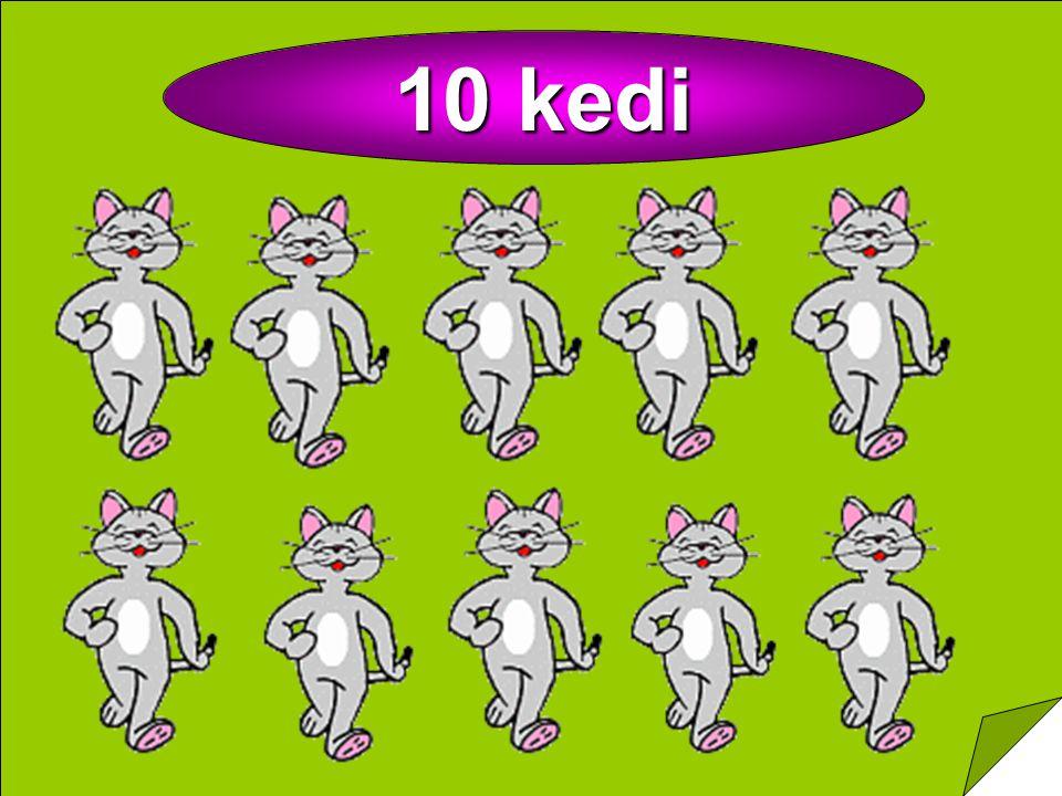 10 kedi