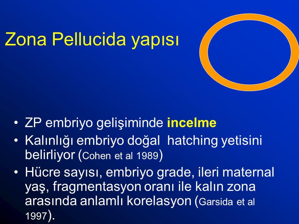 Zona Pellucida yapısı ZP embriyo gelişiminde incelme