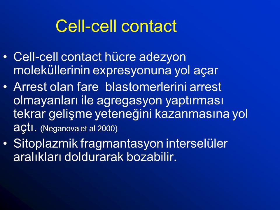 Cell-cell contact Cell-cell contact hücre adezyon moleküllerinin expresyonuna yol açar.