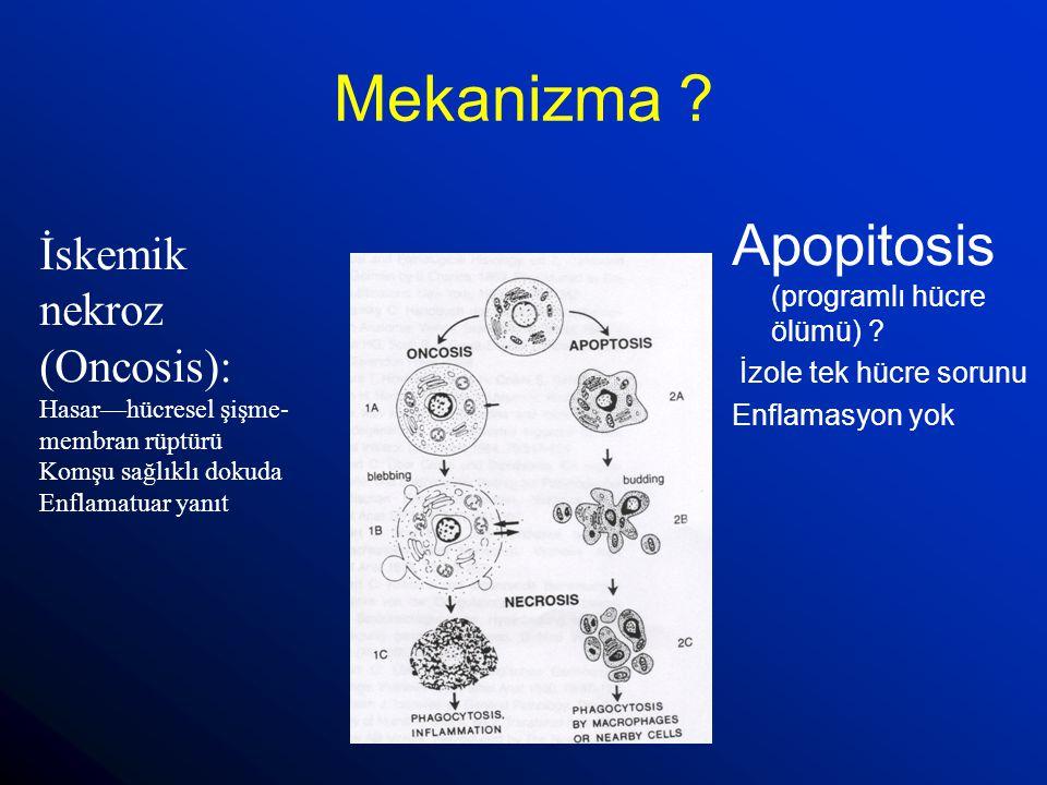 Mekanizma Apopitosis (programlı hücre ölümü) İskemik nekroz