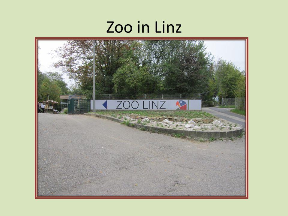 Zoo in Linz