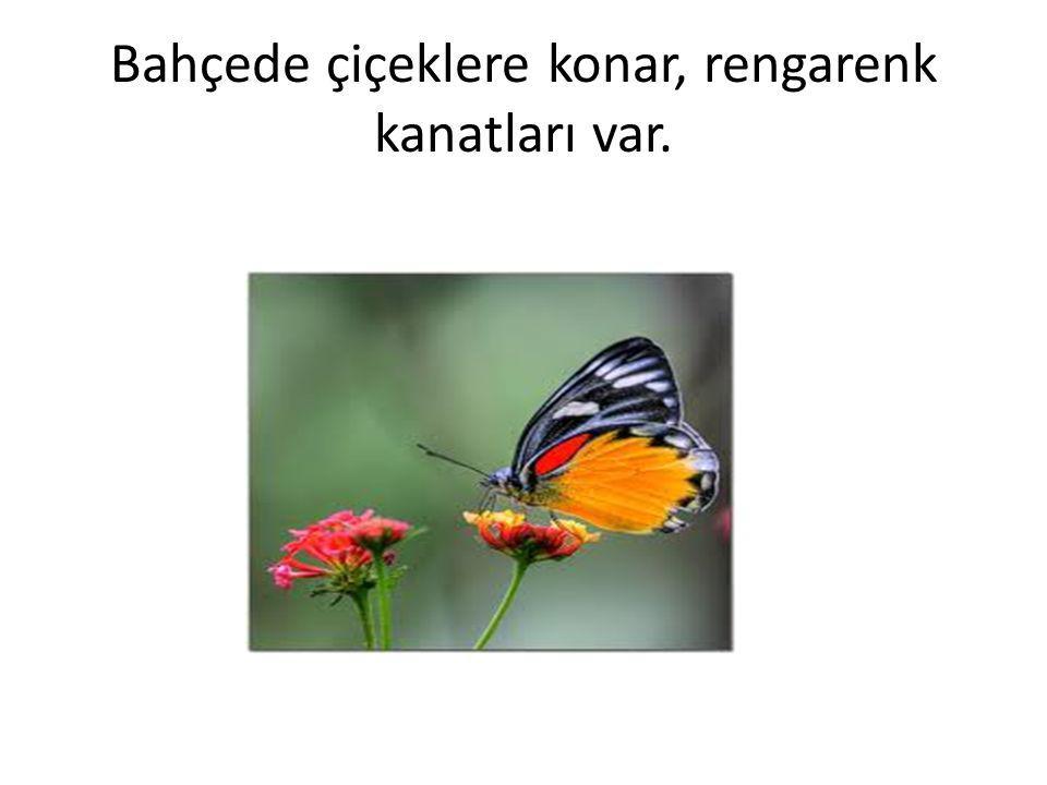 Bahçede çiçeklere konar, rengarenk kanatları var.