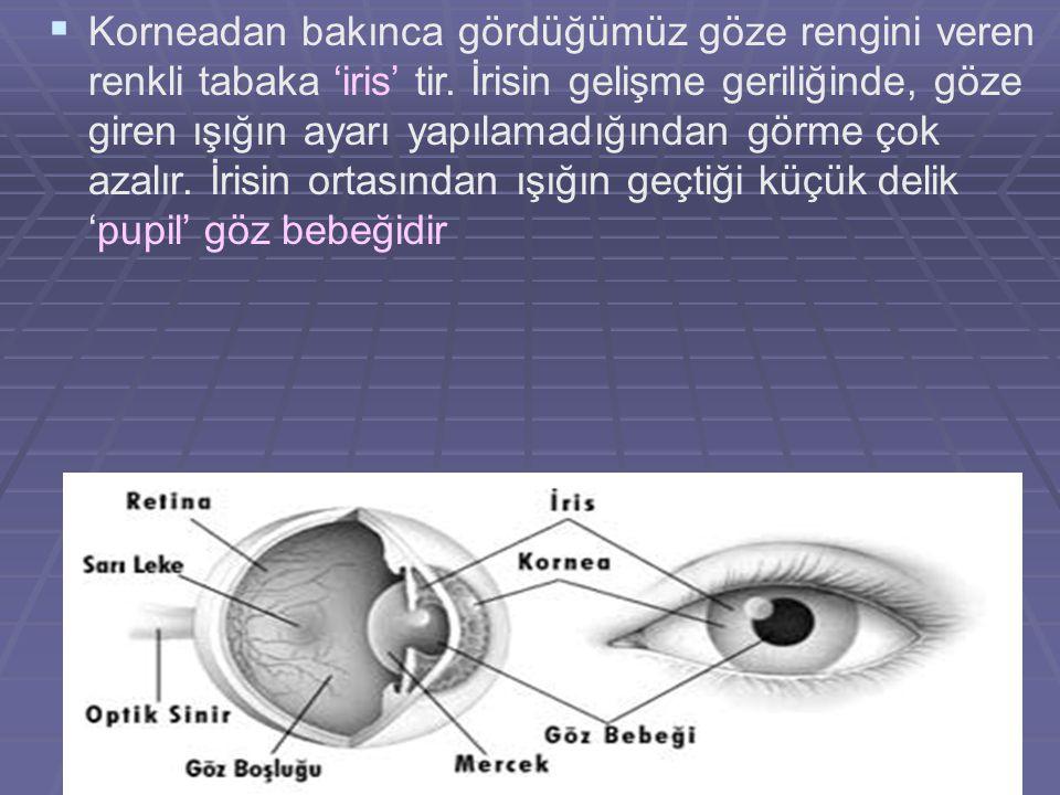 Korneadan bakınca gördüğümüz göze rengini veren renkli tabaka 'iris' tir.