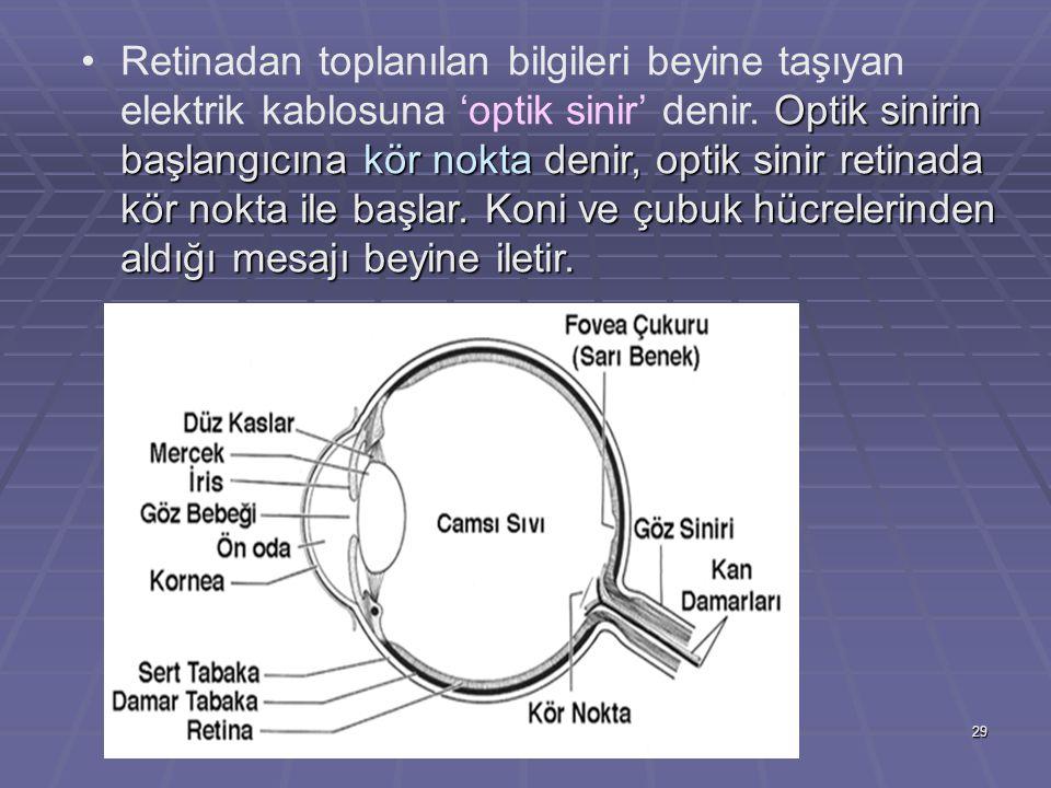 Retinadan toplanılan bilgileri beyine taşıyan elektrik kablosuna 'optik sinir' denir.