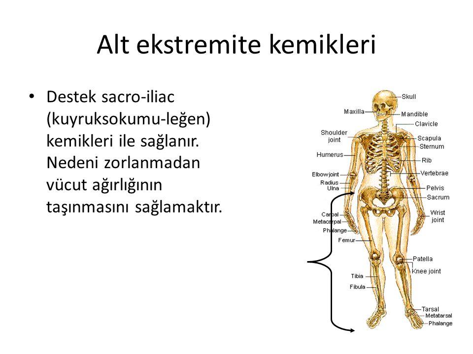 Alt ekstremite kemikleri