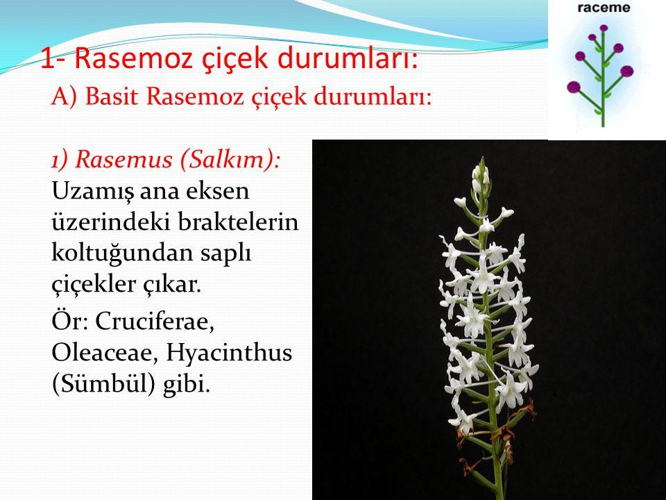 1- Rasemoz çiçek durumları: