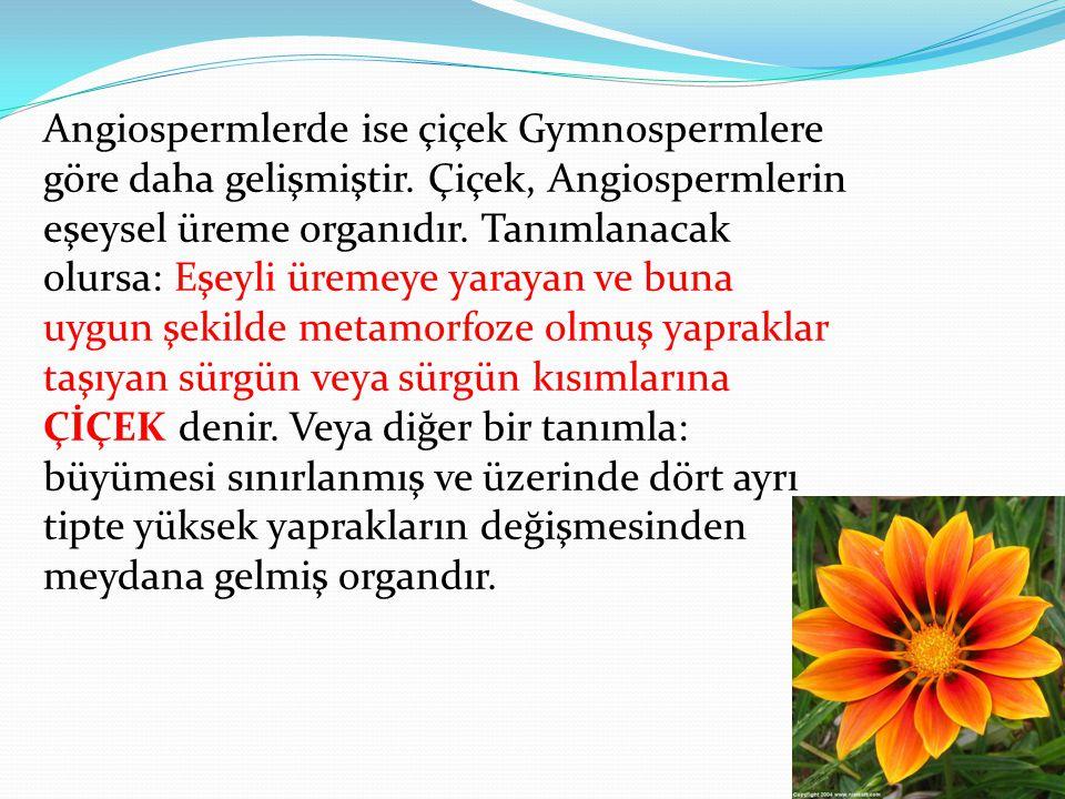 Angiospermlerde ise çiçek Gymnospermlere göre daha gelişmiştir