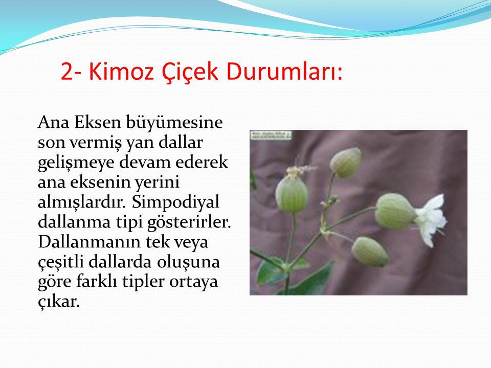 2- Kimoz Çiçek Durumları: