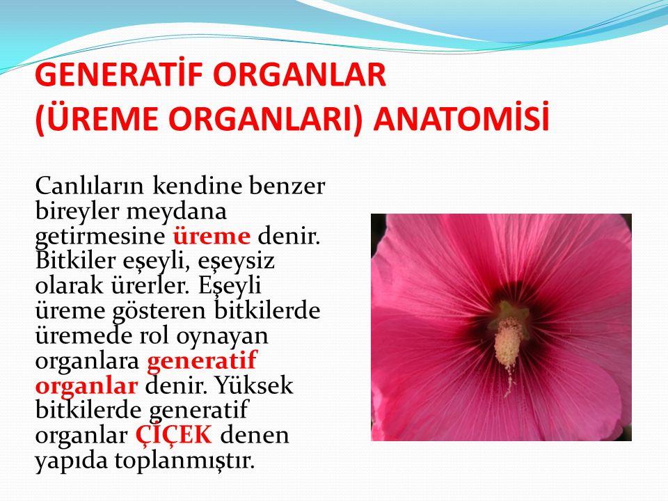 GENERATİF ORGANLAR (ÜREME ORGANLARI) ANATOMİSİ