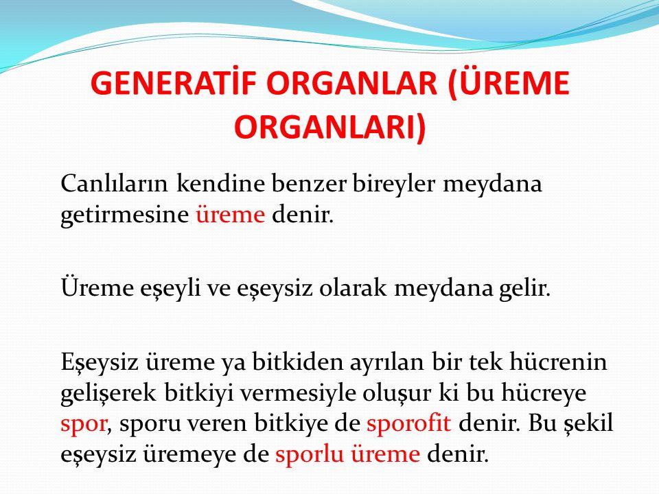 GENERATİF ORGANLAR (ÜREME ORGANLARI)