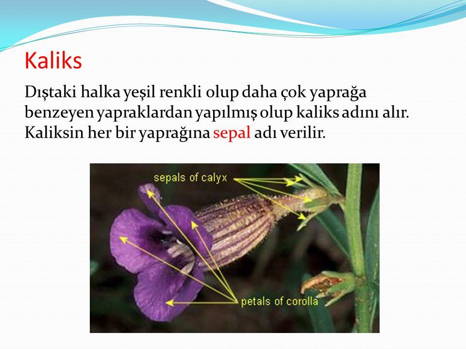 Kaliks