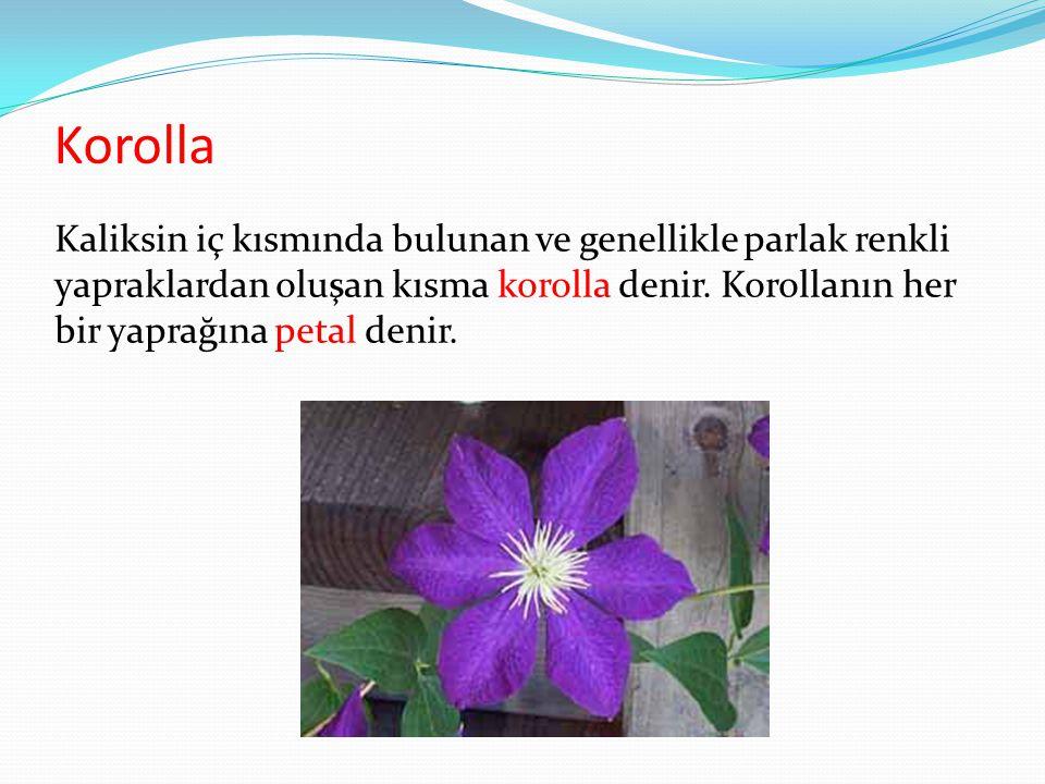 Korolla Kaliksin iç kısmında bulunan ve genellikle parlak renkli yapraklardan oluşan kısma korolla denir.