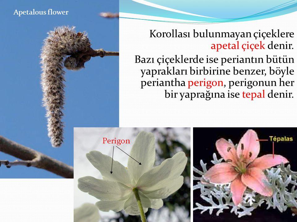 Apetalous flower