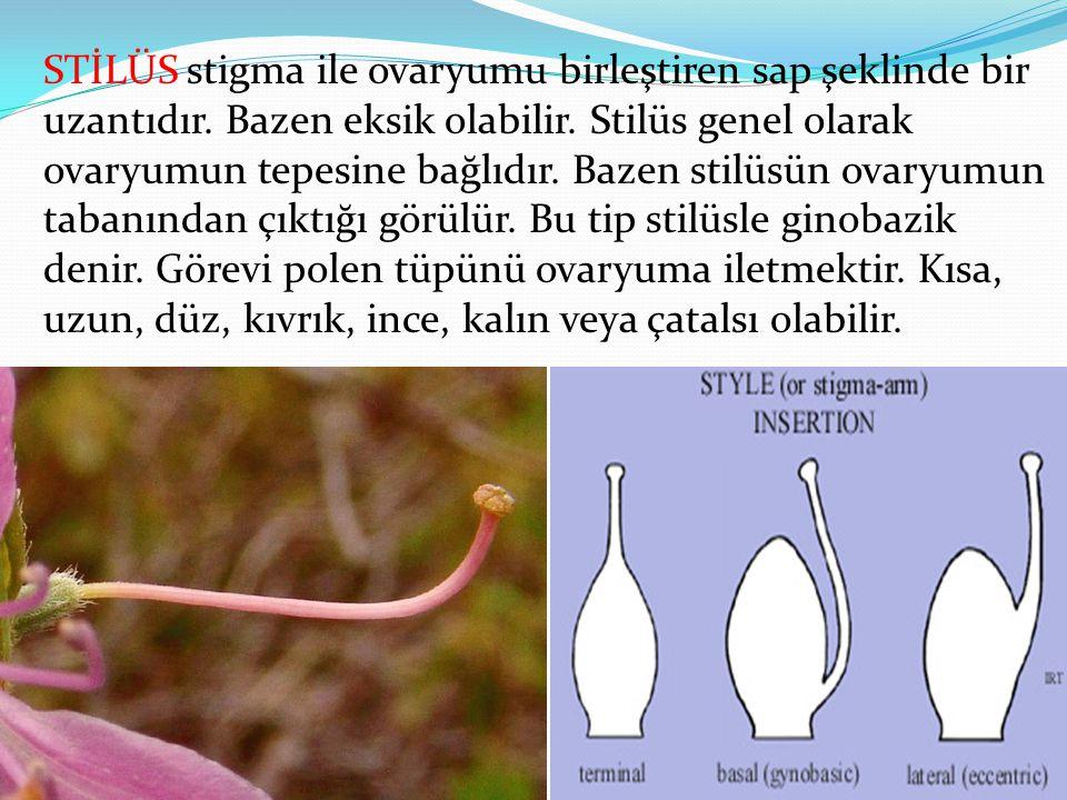STİLÜS stigma ile ovaryumu birleştiren sap şeklinde bir uzantıdır