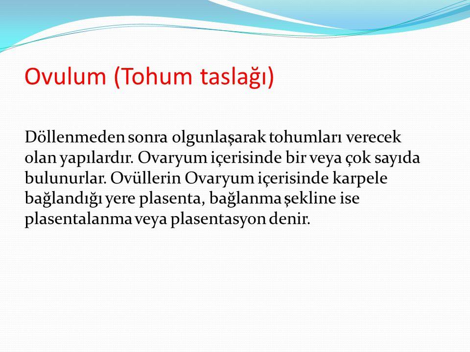 Ovulum (Tohum taslağı)