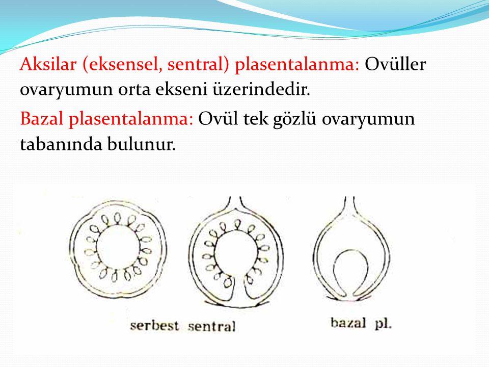 Aksilar (eksensel, sentral) plasentalanma: Ovüller ovaryumun orta ekseni üzerindedir.