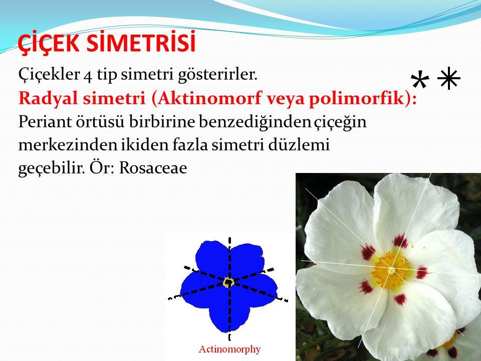 * ÇİÇEK SİMETRİSİ Radyal simetri (Aktinomorf veya polimorfik):