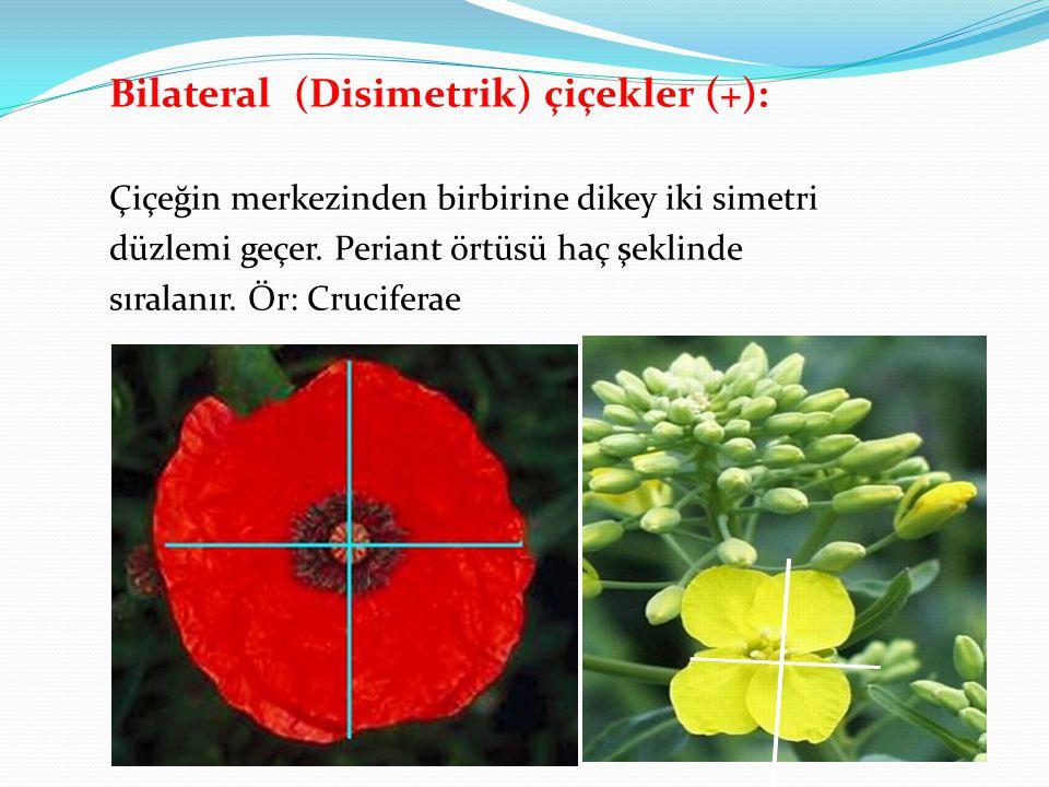 Bilateral (Disimetrik) çiçekler (+):