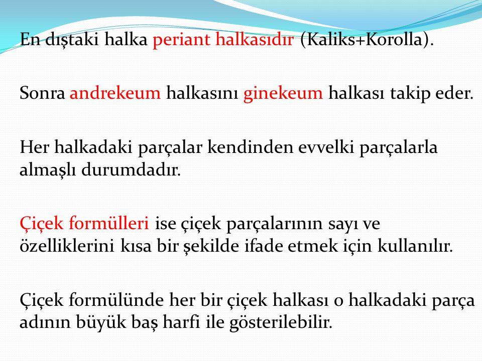 En dıştaki halka periant halkasıdır (Kaliks+Korolla).