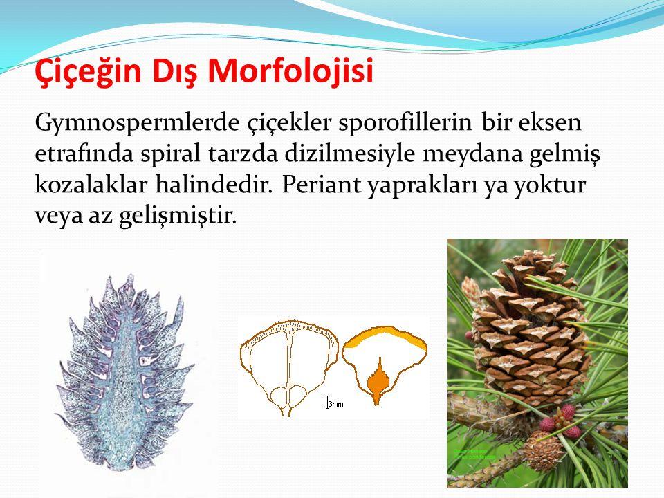 Çiçeğin Dış Morfolojisi