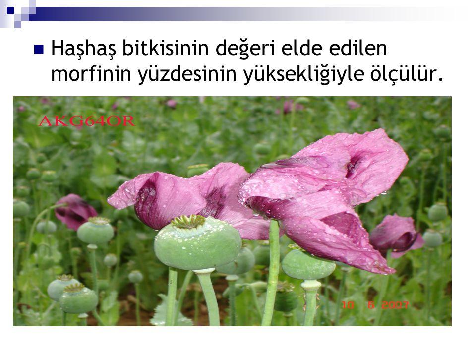 Haşhaş bitkisinin değeri elde edilen morfinin yüzdesinin yüksekliğiyle ölçülür.