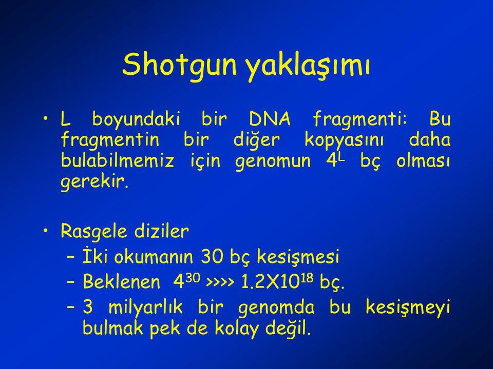 Shotgun yaklaşımı L boyundaki bir DNA fragmenti: Bu fragmentin bir diğer kopyasını daha bulabilmemiz için genomun 4L bç olması gerekir.