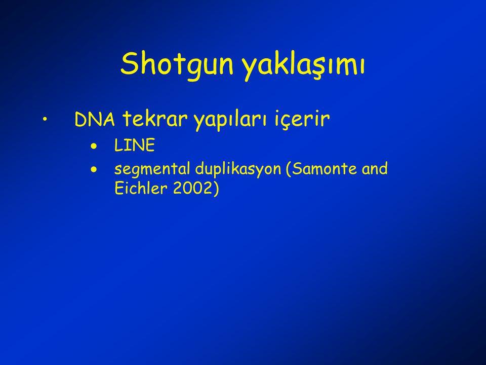 Shotgun yaklaşımı DNA tekrar yapıları içerir LINE