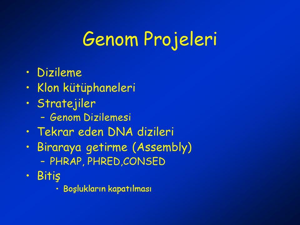 Genom Projeleri Dizileme Klon kütüphaneleri Stratejiler