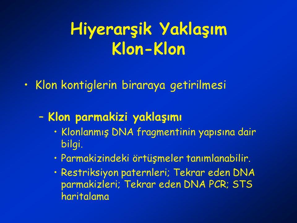 Hiyerarşik Yaklaşım Klon-Klon