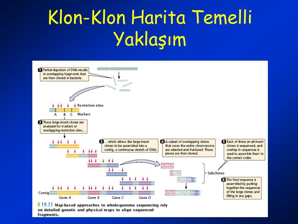 Klon-Klon Harita Temelli Yaklaşım