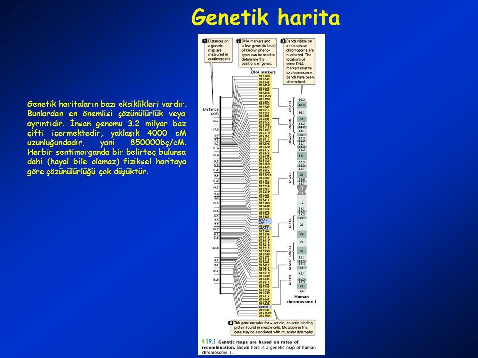 Genetik harita