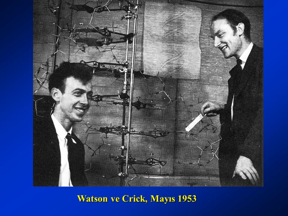Watson ve Crick, Mayıs 1953