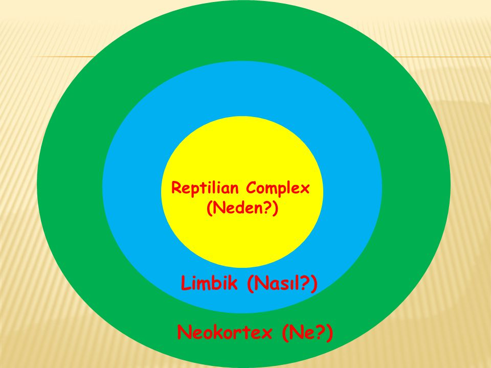 Reptilian Complex (Neden ) Limbik (Nasıl ) Neokortex (Ne )