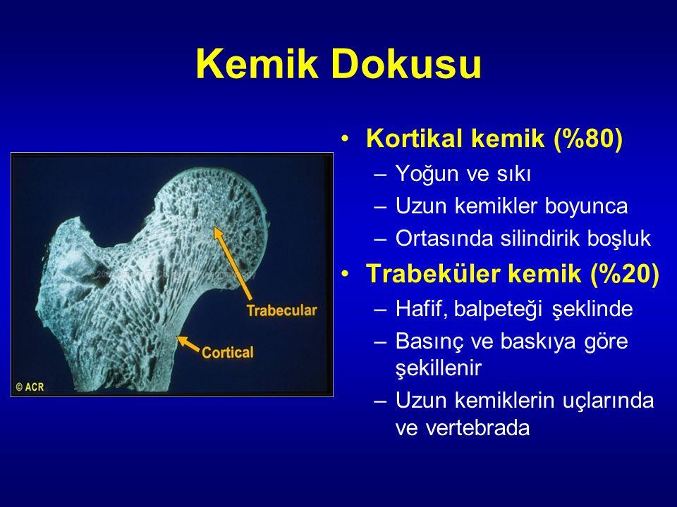 Kemik Dokusu Kortikal kemik (%80) Trabeküler kemik (%20) Yoğun ve sıkı