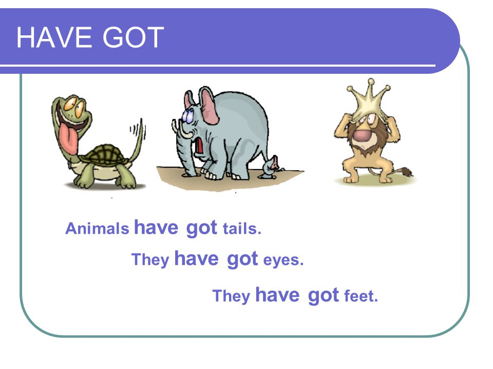 HAVE GOT Animals have got tails. They have got eyes.