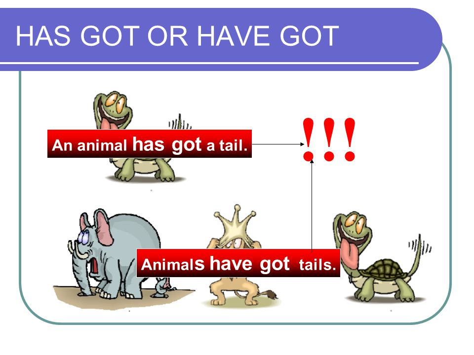 !!! HAS GOT OR HAVE GOT An animal has got a tail.