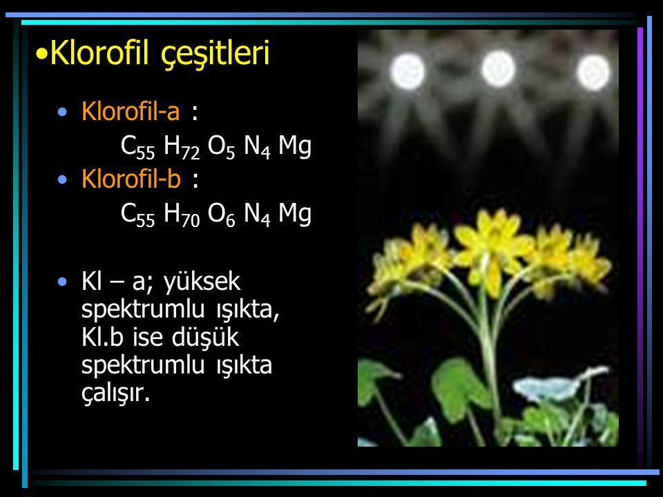 Klorofil çeşitleri Klorofil-a : C55 H72 O5 N4 Mg Klorofil-b :