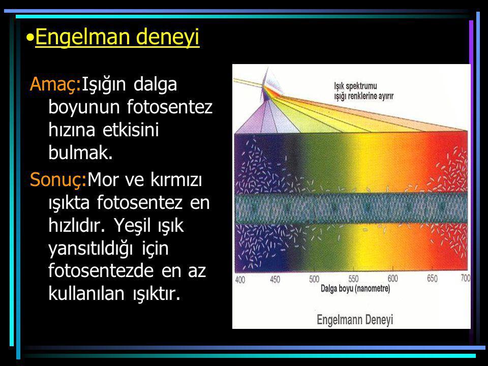 Engelman deneyi Amaç:Işığın dalga boyunun fotosentez hızına etkisini bulmak.