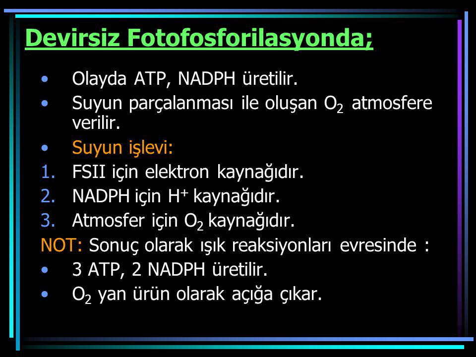 Devirsiz Fotofosforilasyonda;