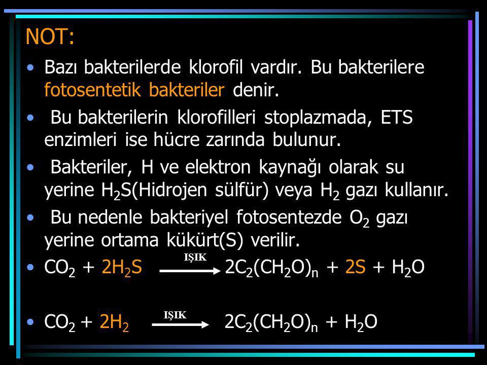 NOT: Bazı bakterilerde klorofil vardır. Bu bakterilere fotosentetik bakteriler denir.