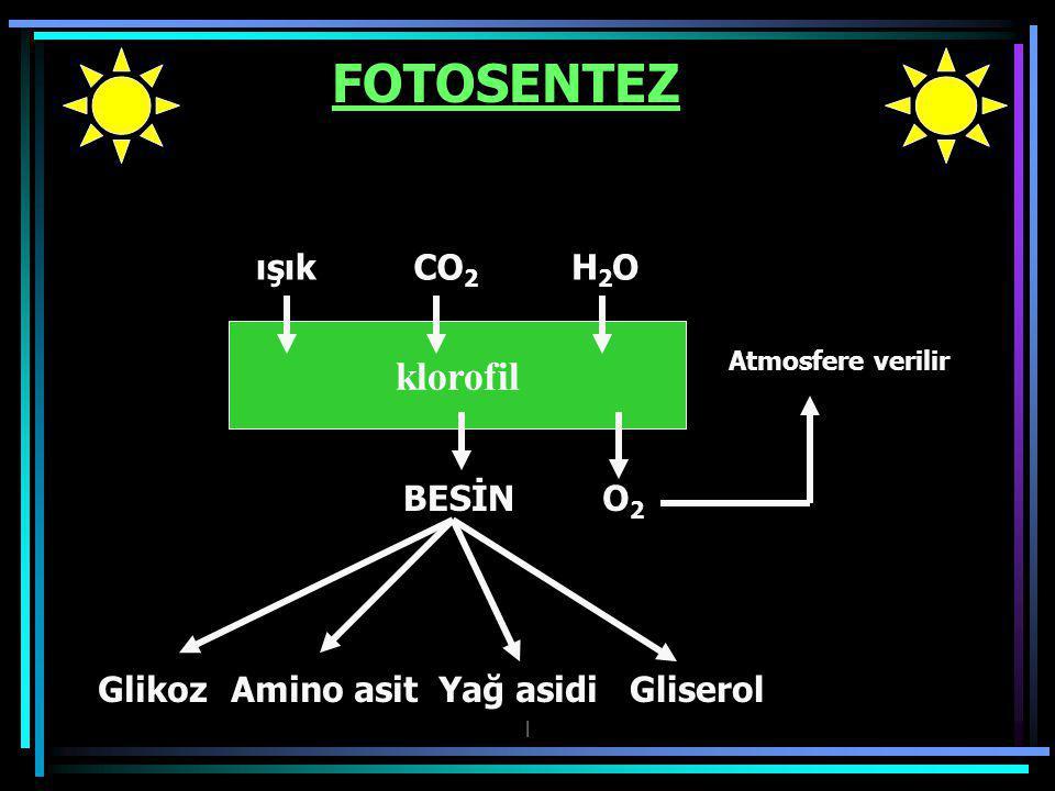 FOTOSENTEZ klorofil ışık CO2 H2O BESİN O2 Glikoz Amino asit Yağ asidi