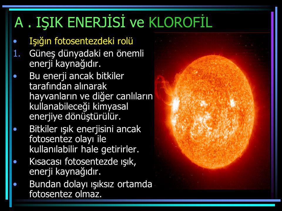 A . IŞIK ENERJİSİ ve KLOROFİL