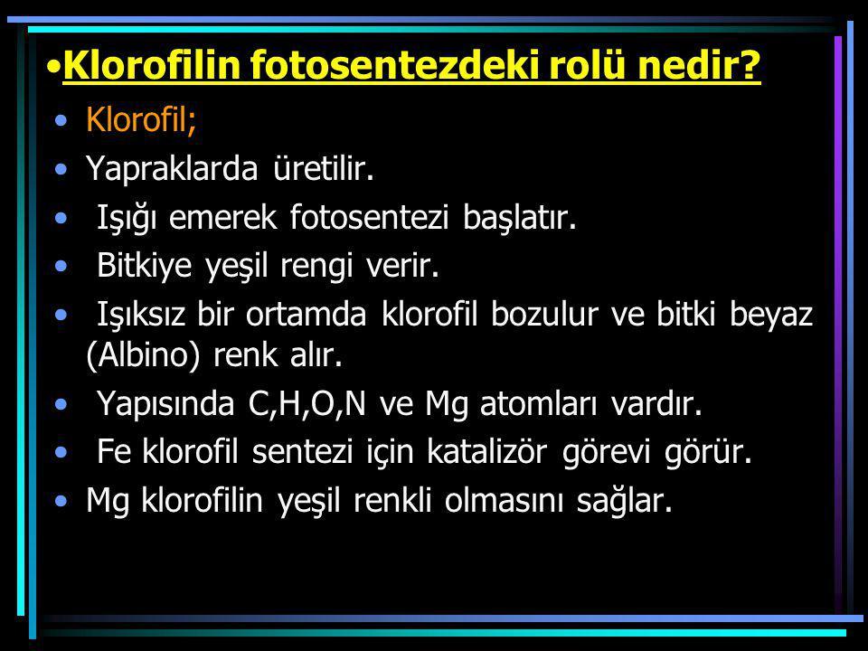 Klorofilin fotosentezdeki rolü nedir